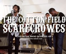 the cotton field scarecrowes